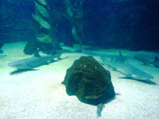 ... fin - Picture of Underwater World Langkawi, Langkawi - TripAdvisor