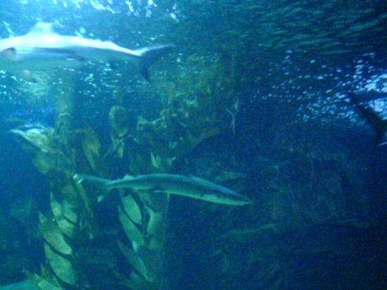 ... turtle - Picture of Underwater World Langkawi, Langkawi - TripAdvisor