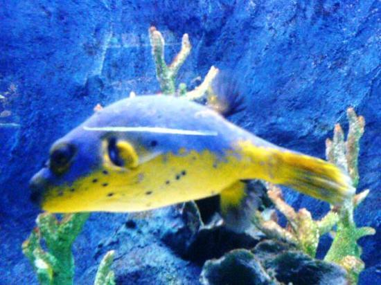 兰卡威海底世界照片