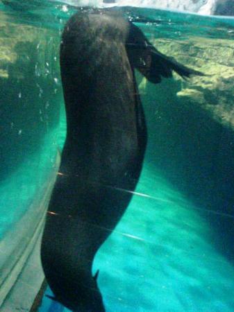 Underwater World Langkawi: xxx