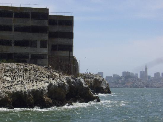 Alcatraz And Mount Tamalpais In The Distance Picture Of