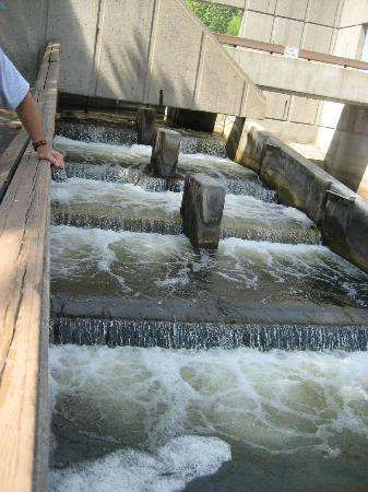 Fish Ladder Grand Rapids 2019 All You Need To Know