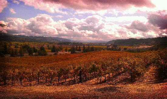 Wine Country Journeys LLC: view of the vineyards