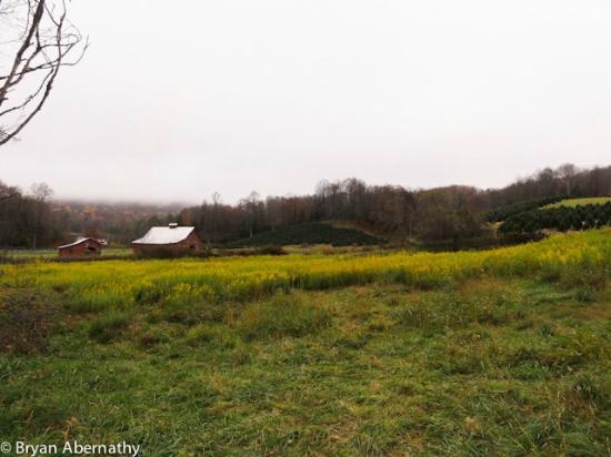 Virginia Creeper Trail: Beautiful views