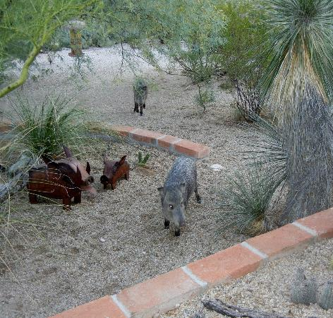 Hacienda del Desierto Bed and Breakfast: Casita's sunrise coffee guests...