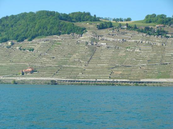 Swiss Riviera Wine Tours: Vinyards of the Swiss Riviera
