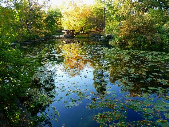 Lincoln Park: Early Morning Reflection, Alfred Caldwell Lily Pool
