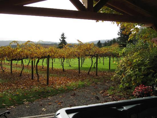 Kiwi Cove Lodge: Autumn view of the Kiwi Vineyard from the Gazebo.