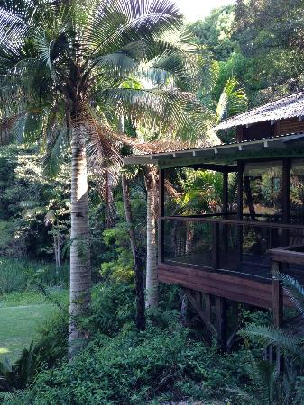 Amazing Wollumbin Palms Retreat at Mt Warning: part view part cabin