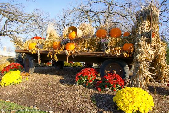 Lake Lawn Resort: Autumn display