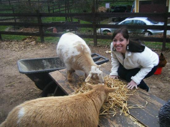 The Social Goat Bed & Breakfast: With Tallulah, who rescued me from the mean turkey