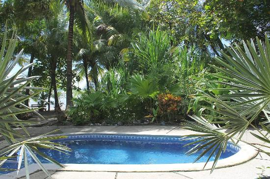 Fenix Hotel - On The Beach: Pool and gardens