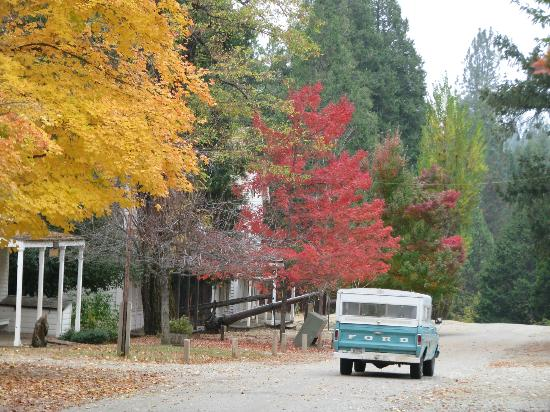 Malakoff Diggins State Historic Park: Fall leaves in North Bloomfield