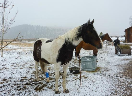 The Ranch at Rock Creek: these horses were in the medical ward, they had some minor injuries.  Very sweet.