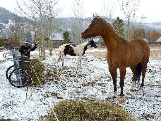 The Ranch at Rock Creek: more gorgeous horses