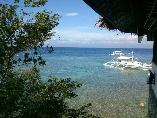 Quo Vadis Dive Resort: little garden view