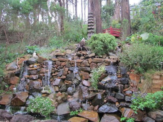 Mt Dandenong Imperial Retreat: A little fountain with lotus lillies in the Chinese pavilion
