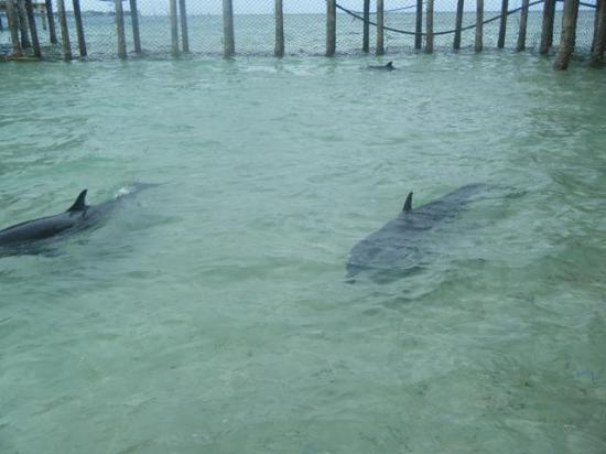Ozamiz City, Filippinene: Two of the 3 Dolphins left