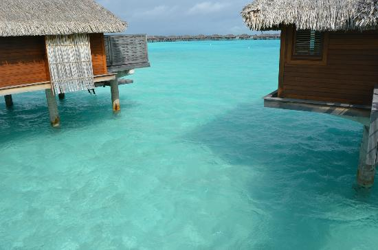 Four Seasons Resort Bora Bora: The water is really that turquoise!!