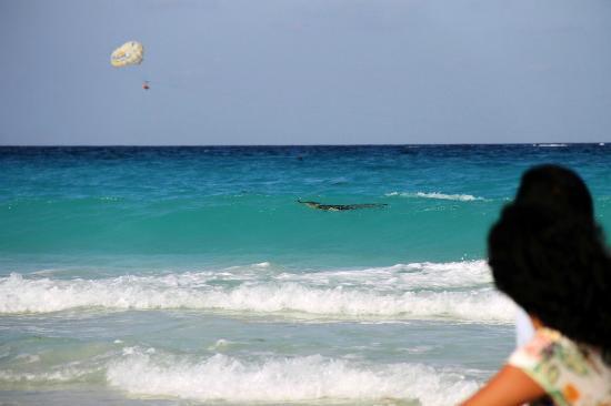 Oleo Cancun Playa : Крокодильчик