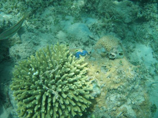 Sun & Sea Hotel: Red sea corals