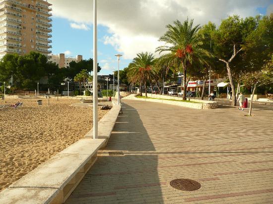Globales Palmanova: Palm Nova