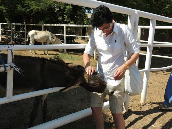 ACE- Animal Care in Egypt: Jules likes nibbling!
