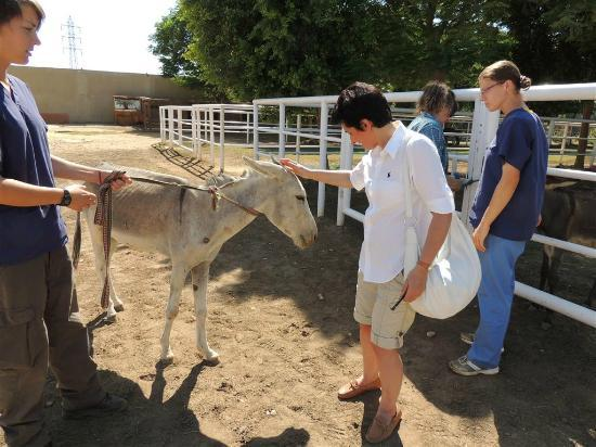 ACE- Animal Care in Egypt: A humbling experience