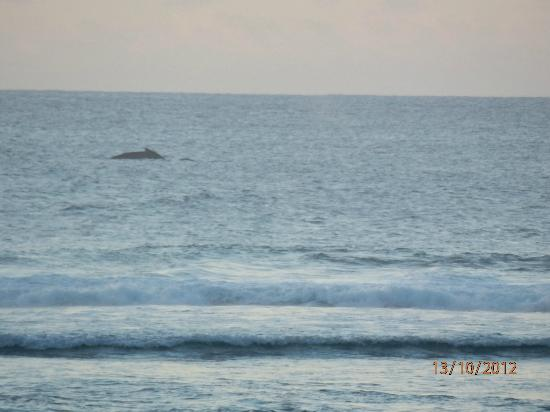 Crown Beach Resort & Spa: The whale we saw from the beachout the front of the resort