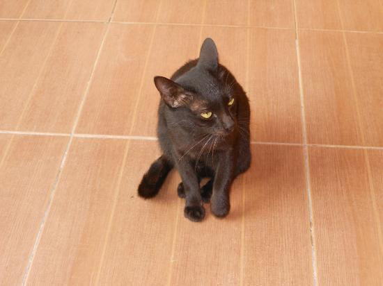 Saikaew Villa: 遊びに来た黒猫