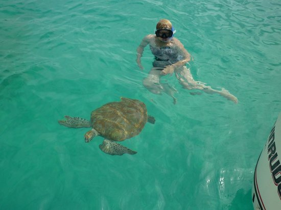 The Club, Barbados Resort & Spa: Turtle swim