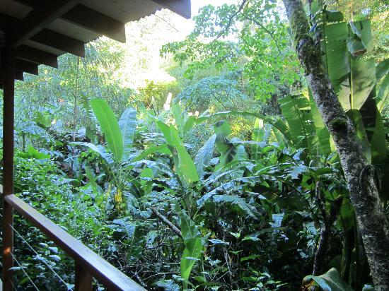 El Tucan Jungle Lodge: view from deck