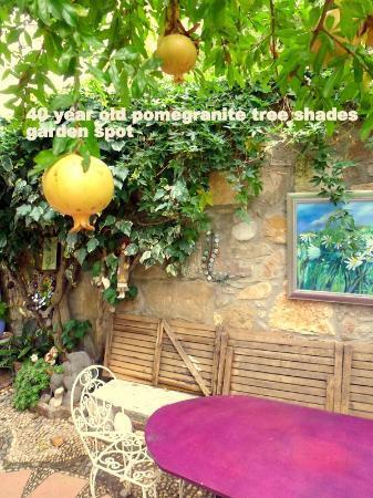 Rengigul Konukevi : Garden shaded by 40 yr olds pomegranite tree
