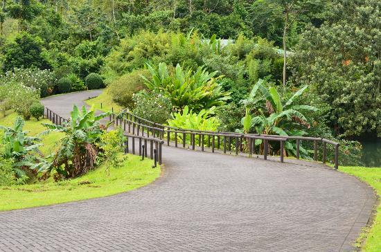 Arenal Manoa Hotel: road to room/office