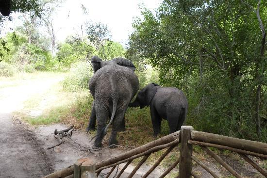 Pom Pom Camp: Elphants outside the Tent