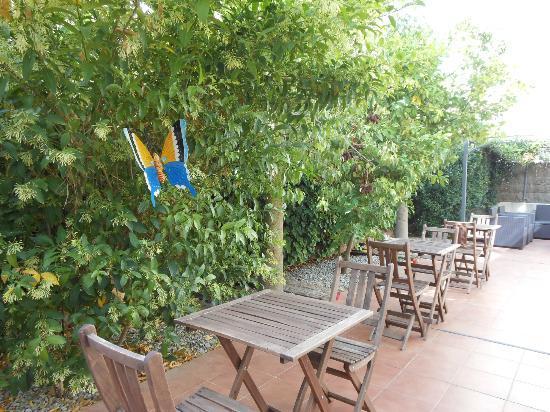 Evenia Platja Mar : Le jardin