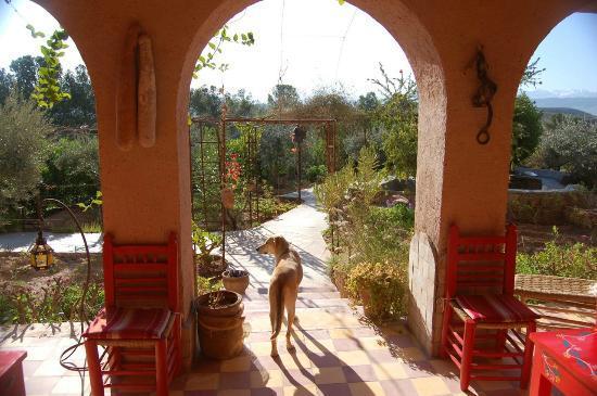 Kasbah Timdaf : Back patio + dog sentry