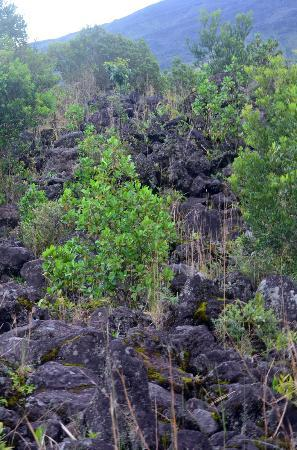 Arenal Adventures: Lava rocks