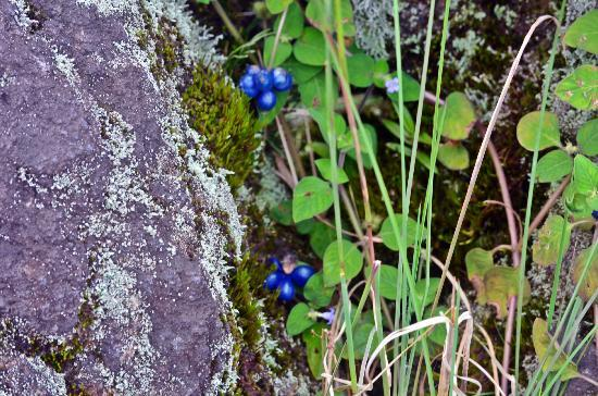 Arenal Adventures: coffe beans growing around lava rocks