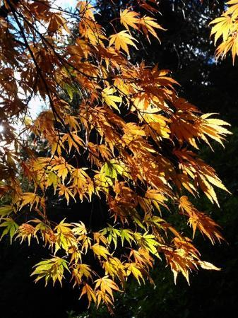 Stourhead House and Garden: Atumn leaves at Stourhead in October 2012