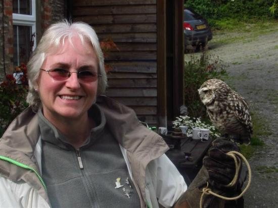 Falconry Experience Wales: My friend Shirley & Bruno the Burrowing Owl