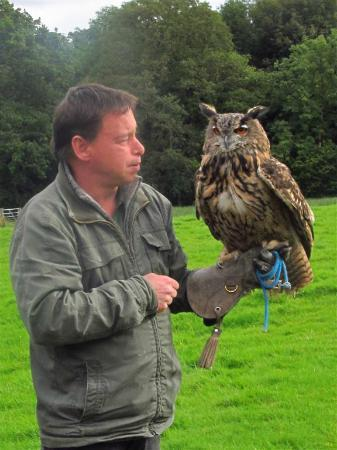 Falconry Experience Wales: Barry & Sasquatch, the Eagle Owl
