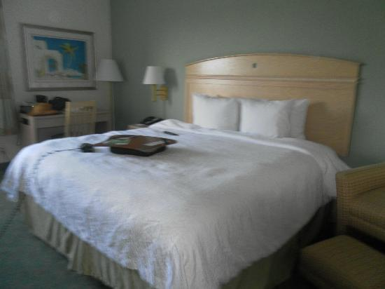 Hampton By Hilton Miami-Coconut Grove/Coral Gables: Chanbre 1 lit 2 pers