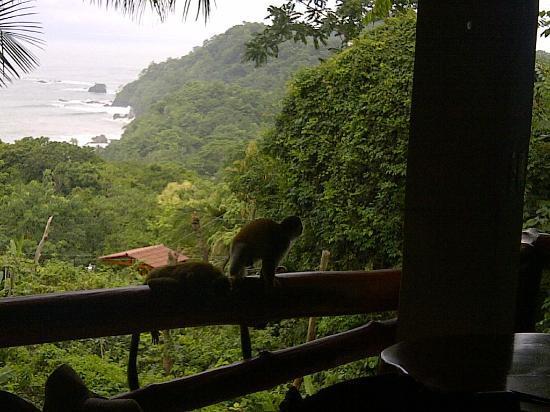 Hotel Costa Verde: monos