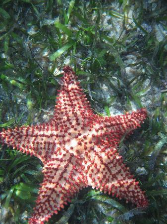 Barefoot Travelers Rooms: starfish out at the monkey island trip