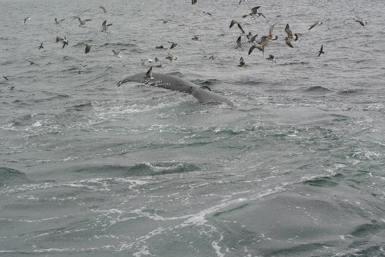 Dolphin Fleet Whale Watch: walvis