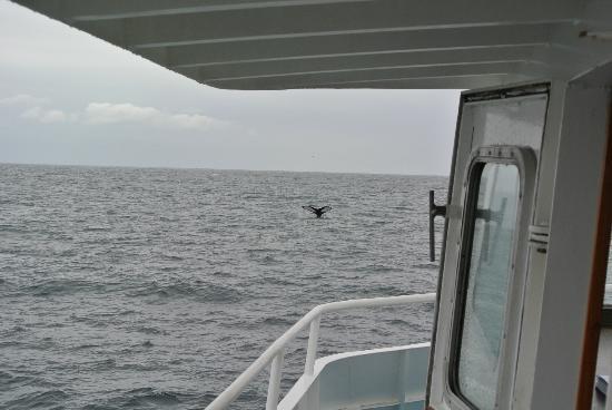 Dolphin Fleet Whale Watch: walvis op 11 uur