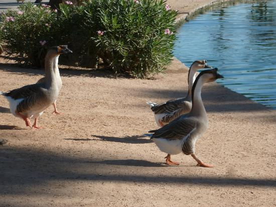 Encanto Park: local residents of the park