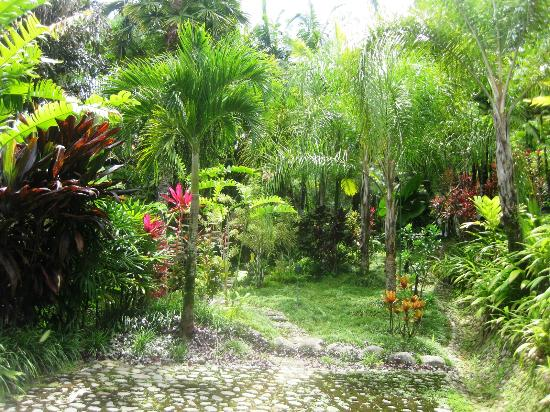 Paradise Costa Rica: Garden behind the villa