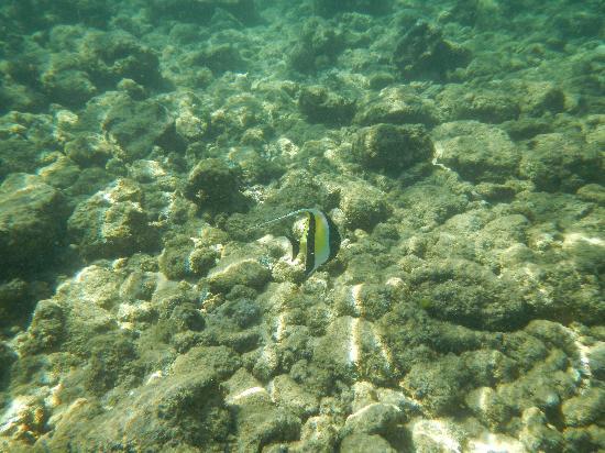 Swimin wit da fishes picture of poipu beach park poipu for Tropic fish hawaii
